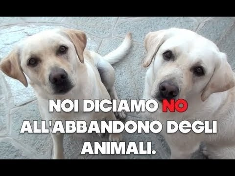 NO ALL'ABBANDONO! - YouTube