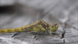 Dragonfly film test.