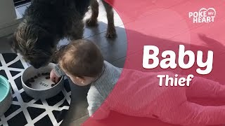 Baby Steals Food From Dog's Bowl