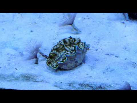 Leather Coral Shedding Its Completely Normal | Doovi