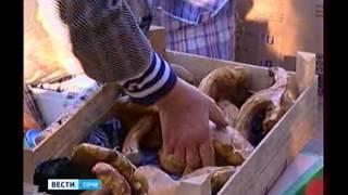 Отравление грибами(http://vesti-sochi.tv., 2012-10-30T11:17:35.000Z)