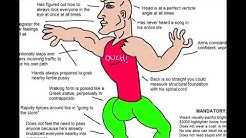 The Virgin Walk and THE CHAD STRIDE