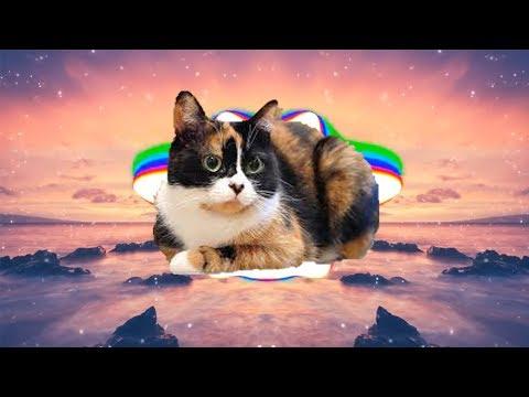 Trap Nation Meme (feat. SlivkiShow)