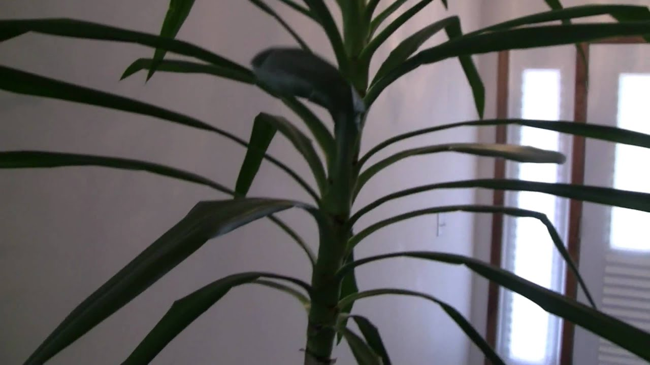 overgrown houseplant - youtube