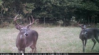 Video Clip from Eight Different Game Cameras