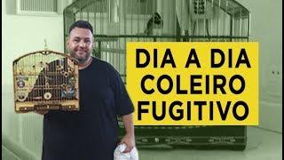 TRATO | Dia a Dia do Coleiro Fugitivo | MAGO DOS COLEIROS