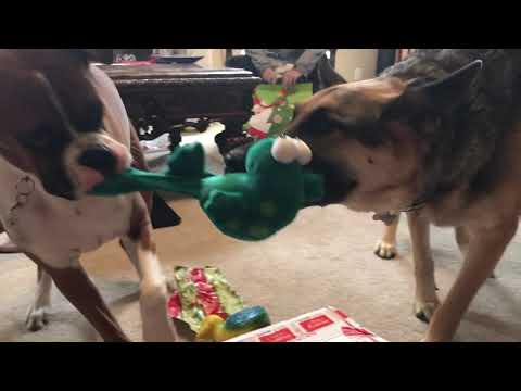 🎄Christmas Chaos 🎁 | with Boxer Samson