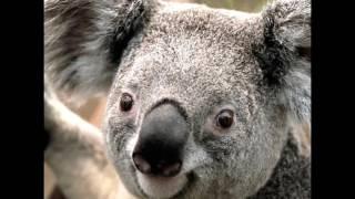 Clarence Tribute only one photo plus deadly koala (SHOUTOUT TO JoethePotato)