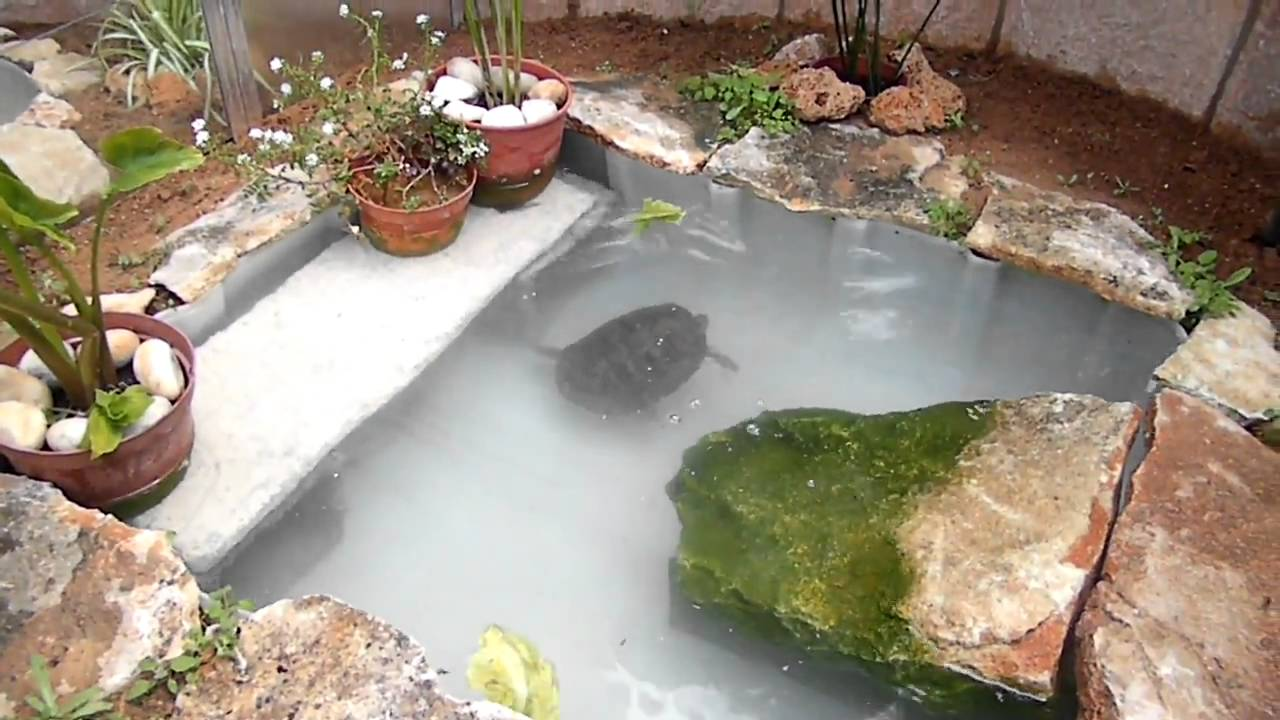 Tortugas en mi estanque youtube for Como construir estanques para peces