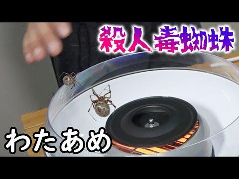 殺人毒蜘蛛で綿あめ作って、黙って人に食べさせる