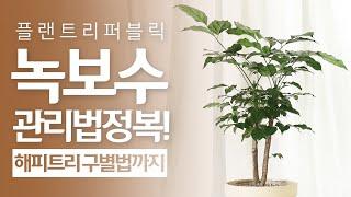 SUB) 녹보수 식물 …