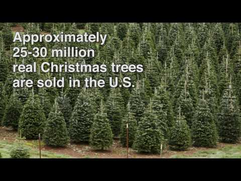 Real Christmas Tree Facts