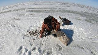 Удачный Клёв Окуня Рыба Кишит Подводная Съёмка Озеро Сартлан