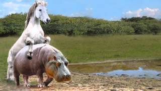Horse & Hippo Fail HD