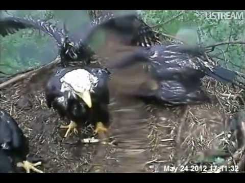 Decorah Eagles 5-24-12 Dancing in the Rain!