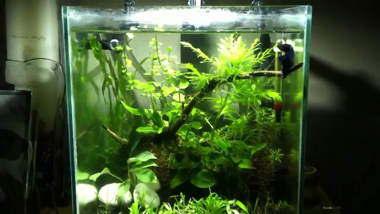 Planted Fluval Chi Update