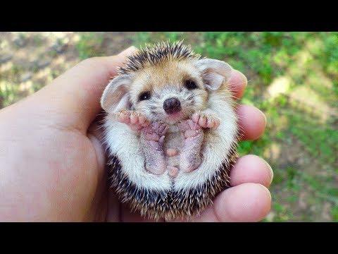 أجمل حيوانات أليفة في العالم  - نشر قبل 3 ساعة