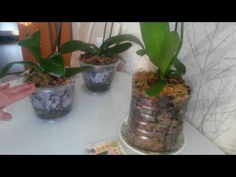 Для чего нужно поливать орхидеи цирконом?