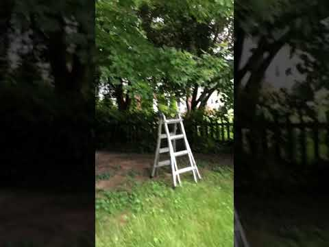 Major hedge and pruning Overgrown property part 1