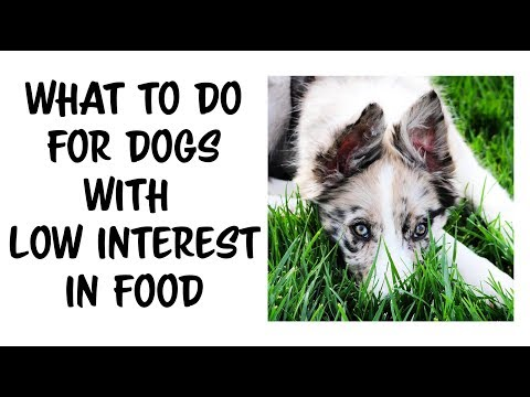 Dog not motivated by food