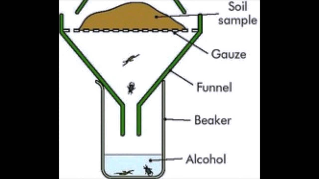 how to make a berlese funnel