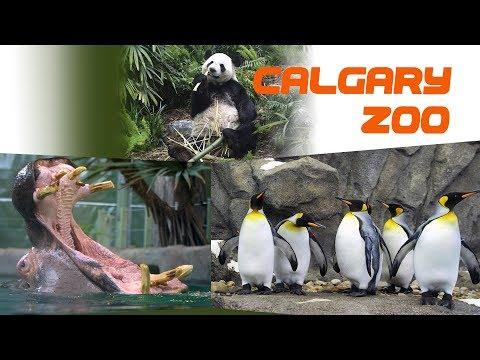 Calgary Zoo - March 2019