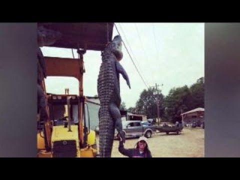 Woman on first ever alligator hunt bags monster gator