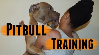 Pitbull Training