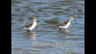 Waterbird Habitat Enhancement Program in California