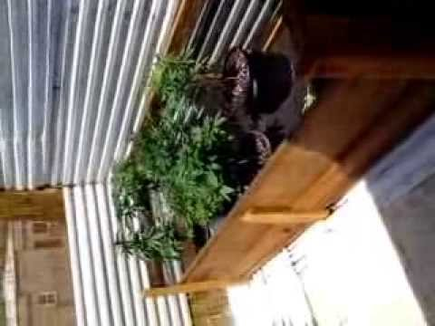 Redwood planter box for outdoor weed cultivation