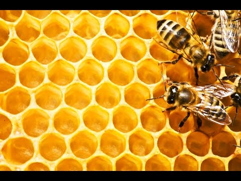 Will States Take Action To Ban Neonicotinoids