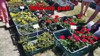 Minikowo Targi Turystyczno-Ogrodnicze LATO NA WSI 12-13.05.2018 Ośrodek Doradztwa Rolniczego pokaz
