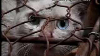 Жестокое обращение с домашними животными в Китае