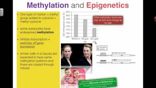 Methylation and Epigenetics (2016) IB Biology