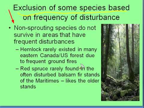 Forest Disturbances - Cause and Result