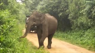 Asia Adventures: Sri Lanka