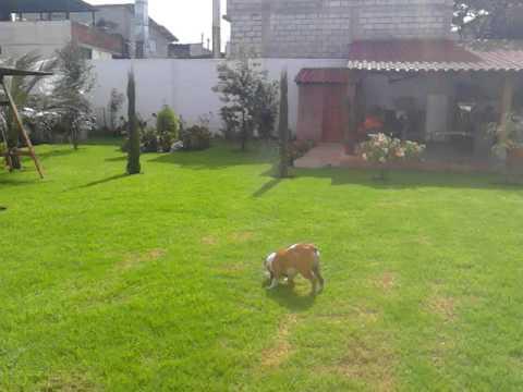 Como dise o jardines con riego autom tico youtube for Riego automatico jardin