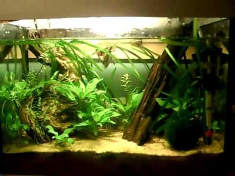 Amazonian aquarium youtube for Amazon fish tank
