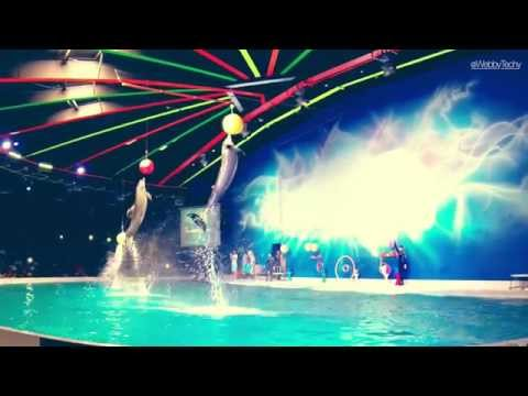 Awesome Dolphin Show in Dubai Dolphinarium
