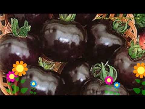 Томат обыкновенный Черная гроздь. Краткий обзор, описание характеристик, где купить Chernaia grozd