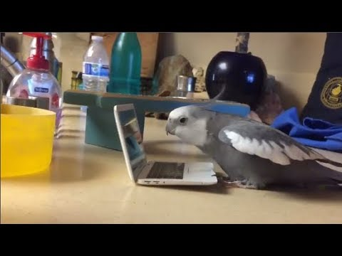 Funny and Cute Parrots Videos - Funny Parrots Videos Compilation 2019 - Youtube