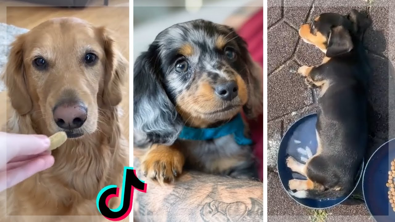 I Found Some Cute & Funny Dogs on TikTok Just For You 🐶🥰