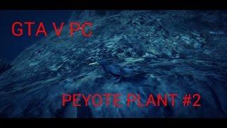 GTA V PC PEYOTE PLANT #2
