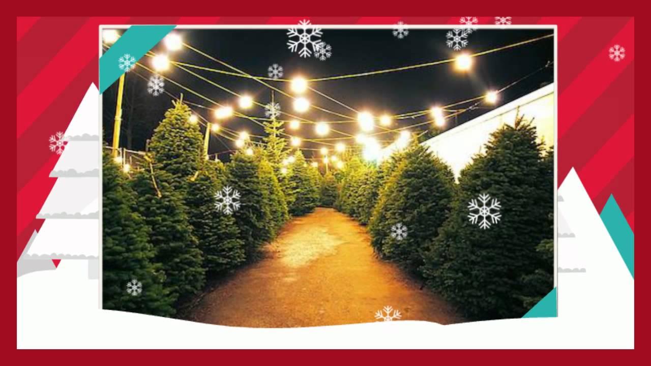 Airport Collision Repair Center Christmas Tree Transporting Tips  - Christmas Tree Lights Repair