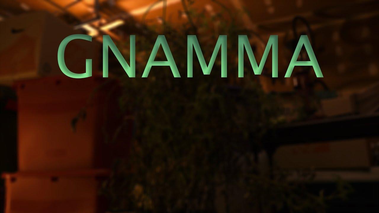 Gnamma - My Rode Reel 2020