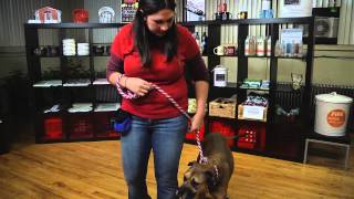 How To Train Show Dogs : Dog Training Tips