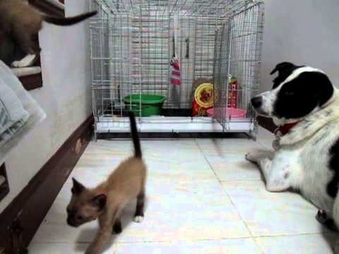 Mommy_the cats escape