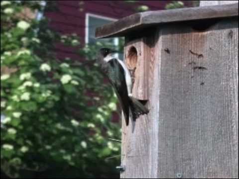Kress, Audubon Society