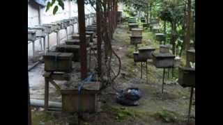 Boh Tea Plantation - [-Backpack Malaysia-] Vlog29
