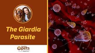 a giardiasis széles körben elterjedt